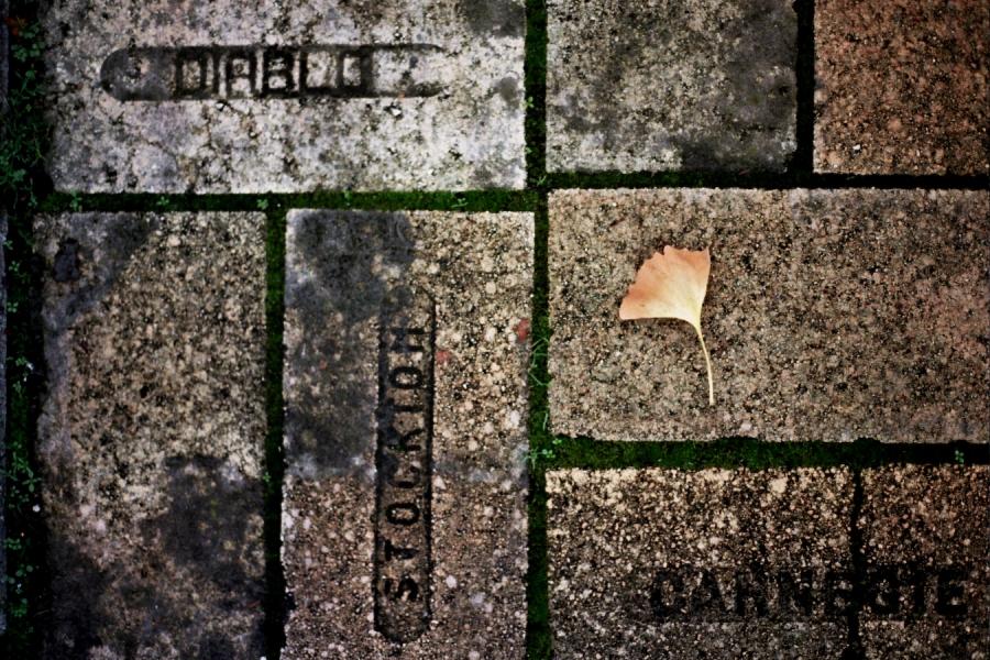 Ginko Leaf on Bricks in San Francisco, CA